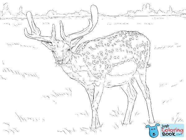 Fallow Deer Coloring Page Free Printable Coloring Pages With Fallow Deer Coloring Pages Printable