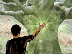 Les Secrets de l'énergie des arbres : Savez vous que l'on peut se connecter à un arbre ? La sylvothérapie est une pratique ancienne venue du Japon pour