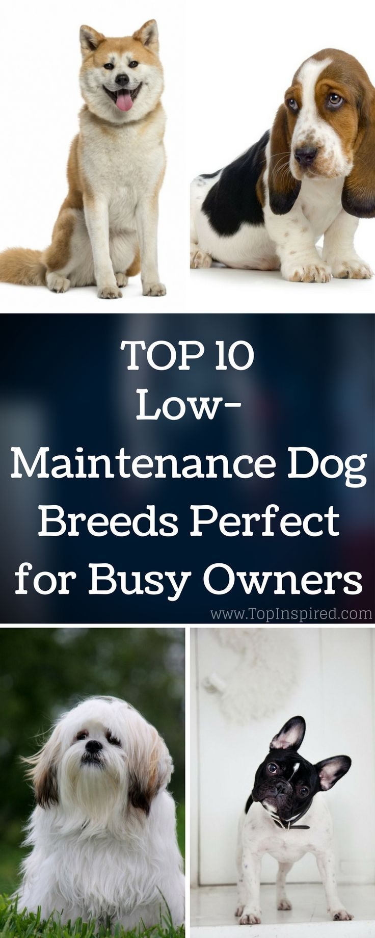 Top 10 Low-Maintenance Dog Breeds Perfect for Busy Owners via @Topinspired