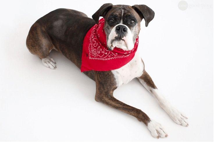 Fabriquez un adorable bandana pour tenir les puces éloignées de votre chien noté 5 - 1 vote Un chien qui se gratte et voici la psychose des puces qui revient! En effet, il est toujours désagréable pour nous et bien sûr pour lui qu'il en soit infesté et c'est en cela que la prévention est...