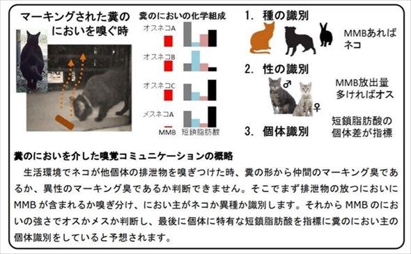 岩手大学 ネコの縄張り行動 縄張り ネコ フェロモン