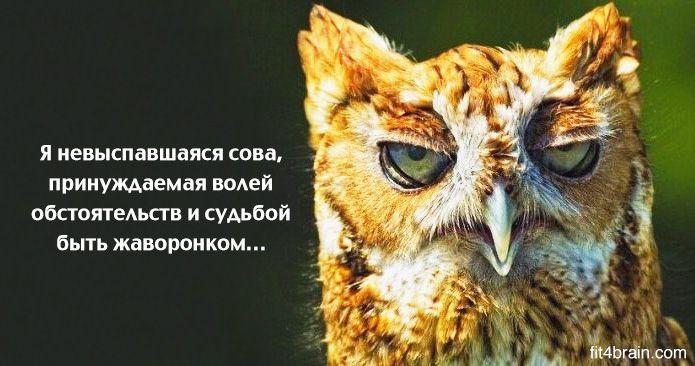 сова, будь Жаворонком