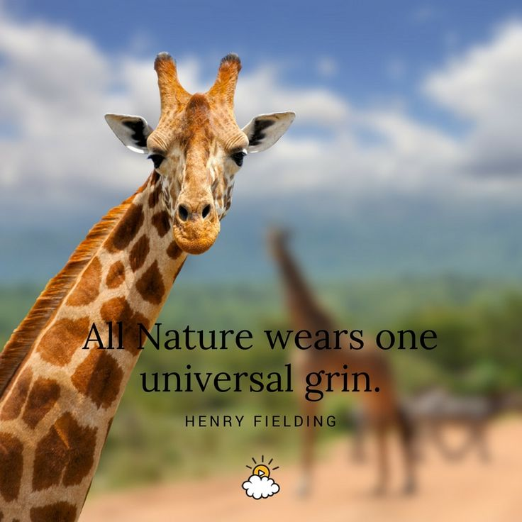 """""""All Nature wears one universal grin."""" - Henry Fielding"""