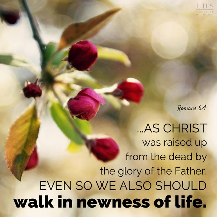 """Day by day in Faith it's not easy but the reward in heaven makes it all worth it """"to be with the one who died for me what a day glorious day that will be"""""""