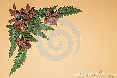 Arrangement whit cones enupar and fern