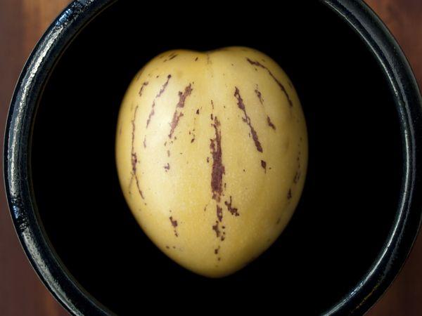 Pepino Melon