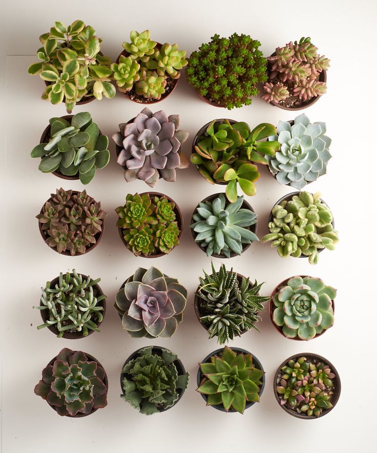 4 Inch Assorted Succulent Collection Succulent Garden Design Succulent Landscaping Succulents