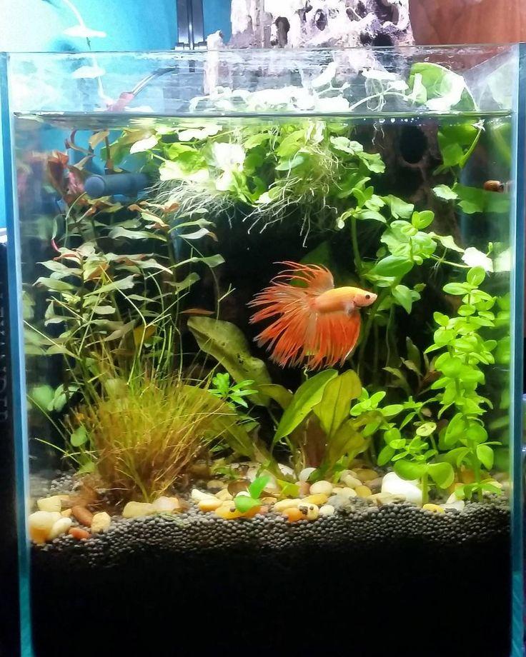 22 best betta tank ideas images on pinterest fish for Betta fish care water