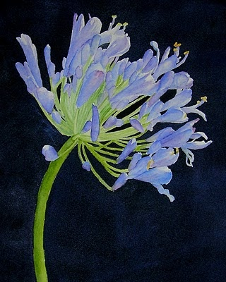lily of the nile -- the gorgeous agapanthus