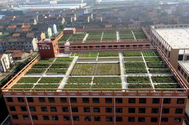 124 best images about urban sanctuaries  roof  u0026vertical gardens on pinterest