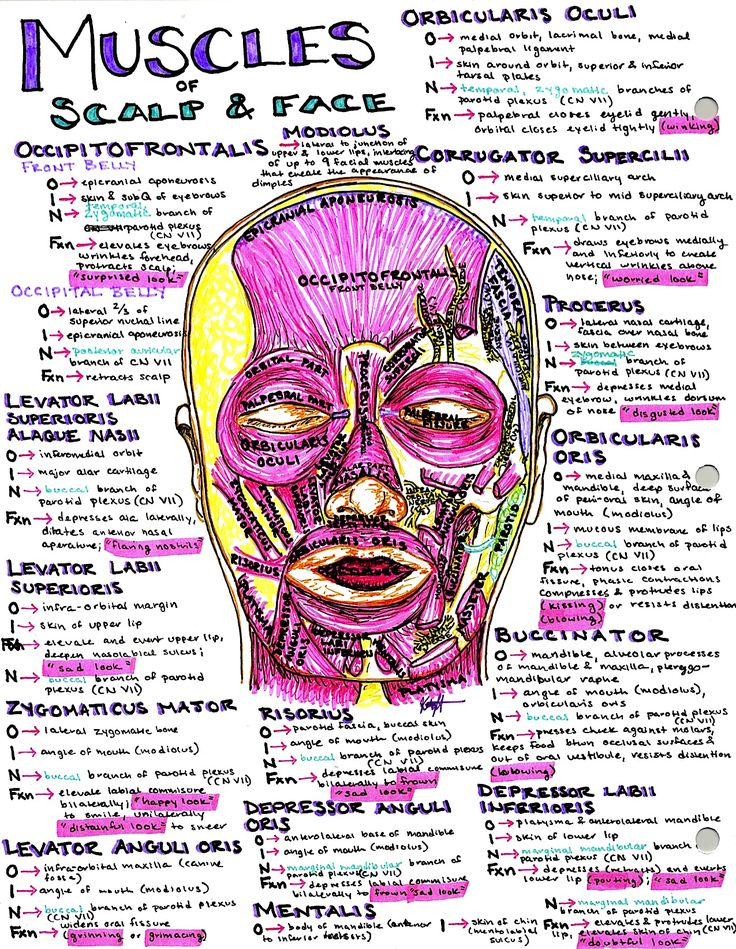 Hanson's Anatomy Med School Notes & Illustrations. The most colorful place to study online