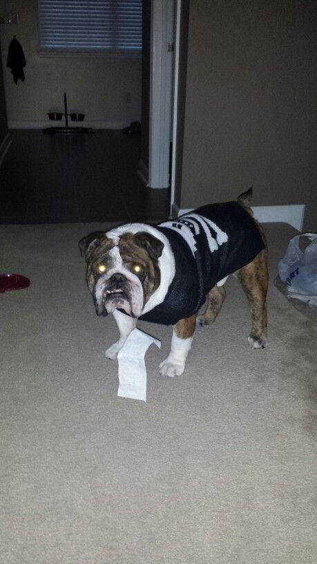 #receipt #bully #guilty #dog