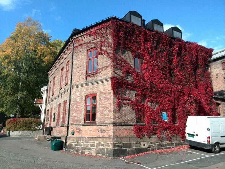 Oslo beautiful autumn colours