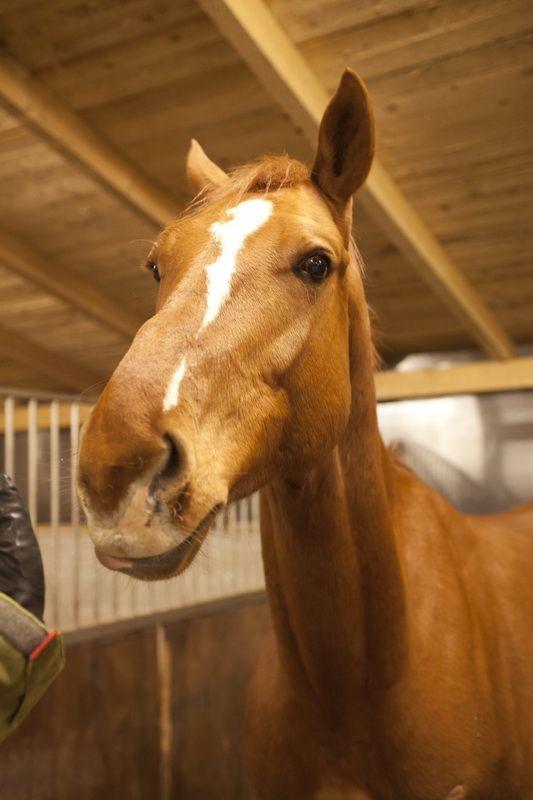 Lovaglás, lovasoktatás, bértartás és lovaskocsizás Zirc