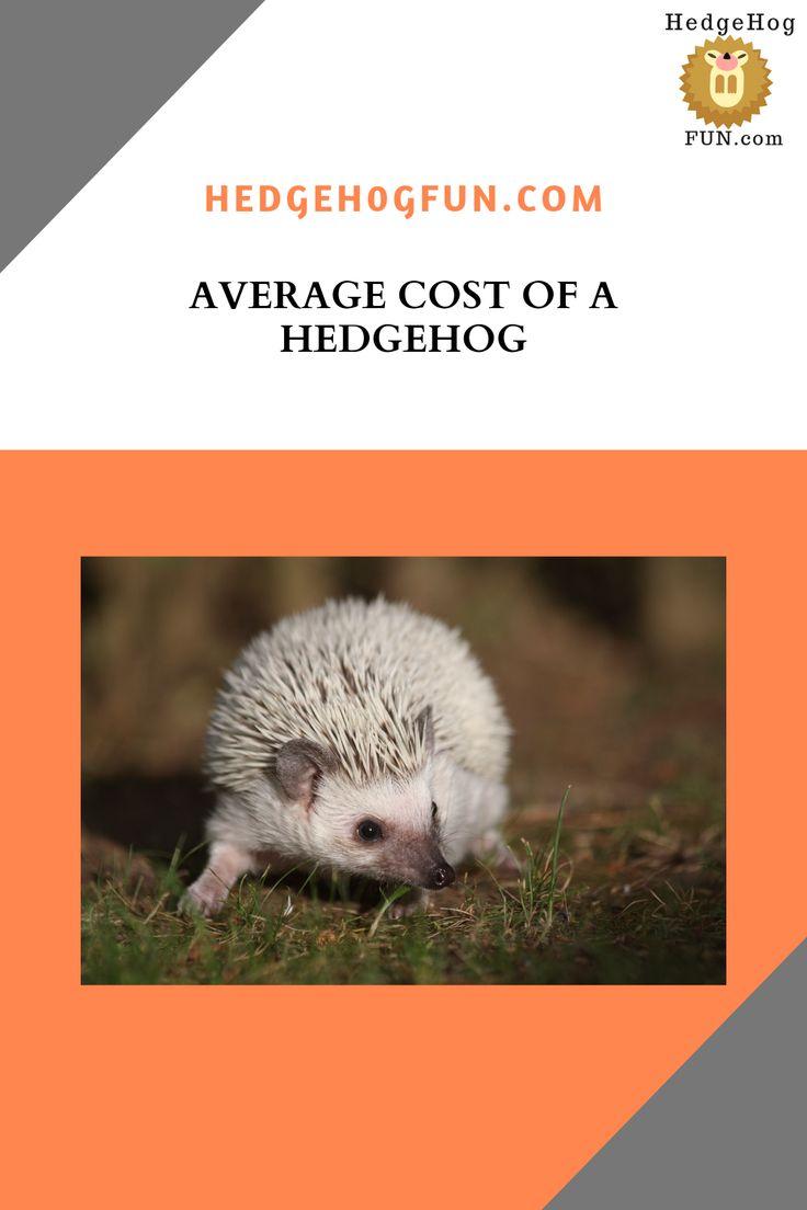 Average cost of a pet hedgehog hedgehog pet hedgehog