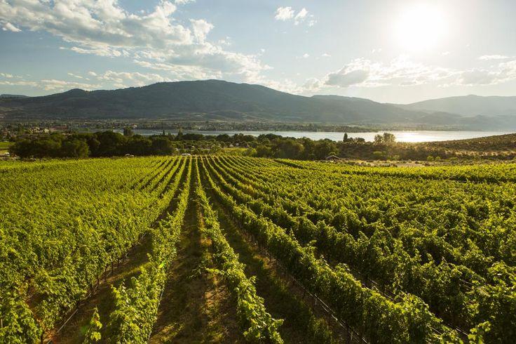 Great Estates Package at Spirit Ridge Vineyard Resort & Spa - Osoyoos, BC #travel #bcWine
