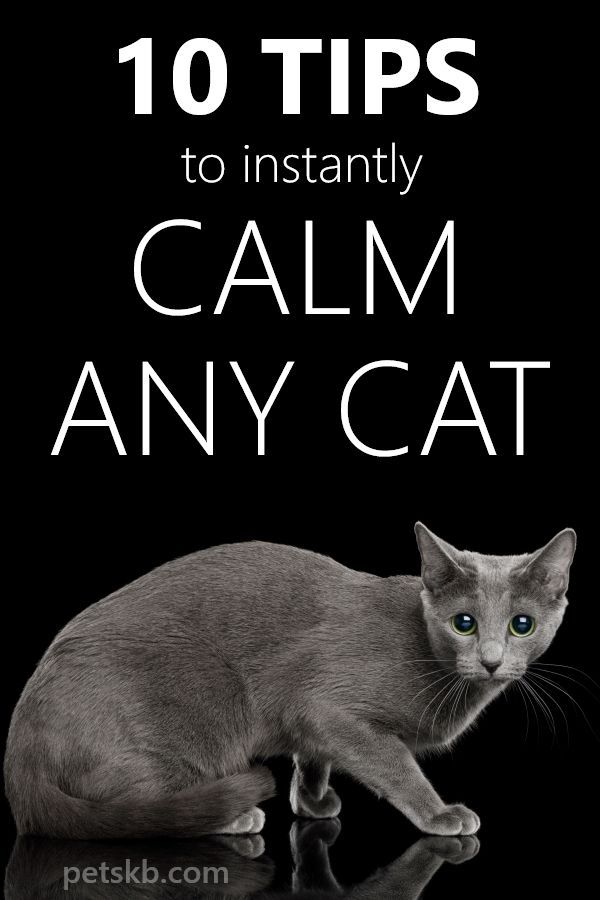 086f259303313688c9d550f98d60b42a - How Do You Get A Cat To Calm Down