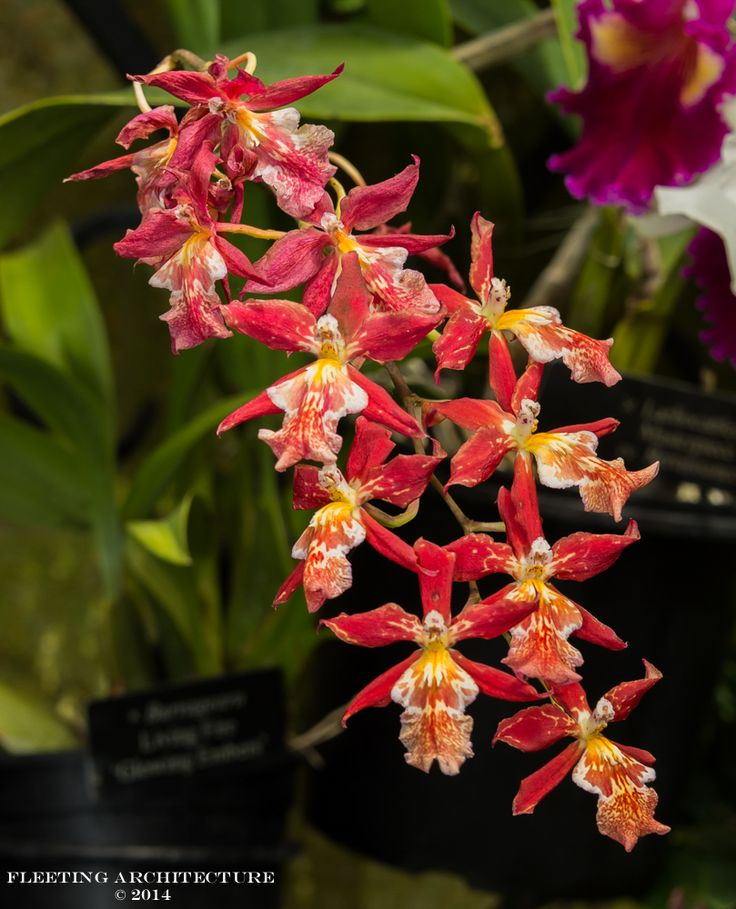 Orchid House at Longwood Gardens 2014
