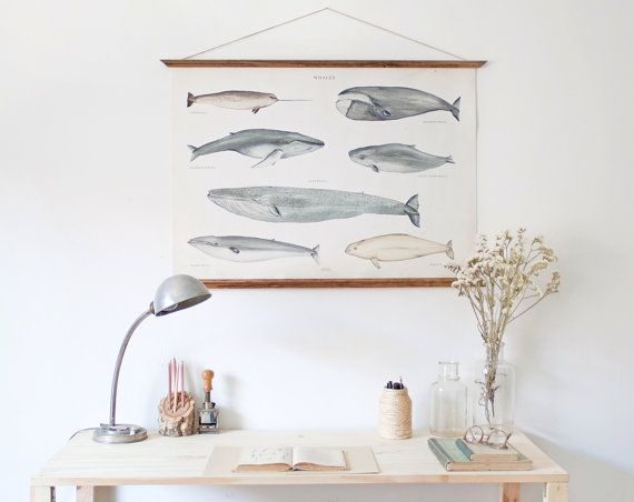 LARGE A1 Whales Canvas poster - vintage illustration educational chart  WAP2001