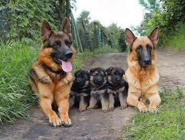 All in the family!