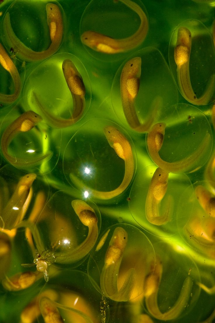 (via 500px / Glass Frog Eggs by Robin Moore)