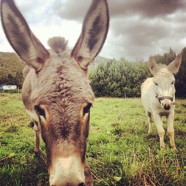 Eccoli i protagonisti dell'escursione di oggi: Martino e Mentuccia asini del Monte Pisano