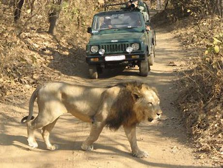 Gujarat Tour Packages - Registhan Tour India provide cost saver package offer to all. Enjoy city tour of Ahmedabad, Gir etc. Book Gujarat Tour Packages.