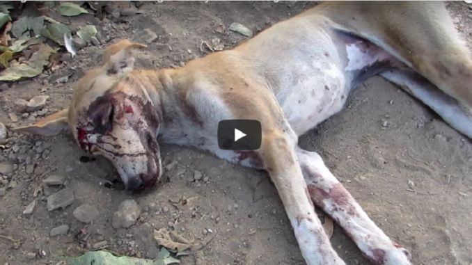THIS DOG CRAWLED INTO A GARDEN TO DIE…
