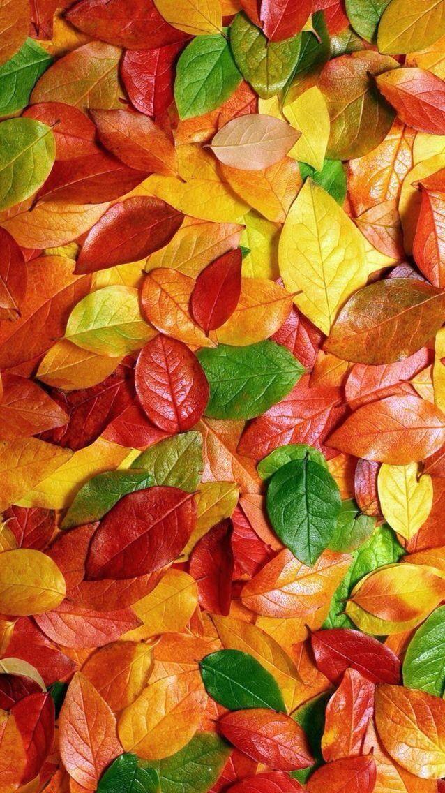 The 25+ best Autumn iphone wallpaper ideas on Pinterest ...