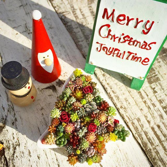 2016.12.25 🎄 Merry Christmas 🎄 . 我が家のクリスマスはひと段落☺︎ 今朝起きるとツリーの下のおもちゃに紛れて私にもパパサンタからプレゼントがー✦ฺ たまにはやるじゃないか、このやろう。 . 今朝はとってもいい天気!! おもちゃも増えたことだし断捨離からの大掃除しよっかな〜٩( ᐛ )و . みなさまステキなChristmasを♡♡♡ . . #succulent #succulents #succulove #leafandclay #SuckerForSucculents #sedum #garden #Christmas #Christmastree #多肉 #多肉植物 #セダム #タニラー #雪国タニラー #信州29会 #ちまちま倶楽部 #ちまちま寄せ #寄せ植え #まいまい寄せ #セダム丼 #セダム寄せ #よせよせセダム #庭 #ガーデニング #多肉の紅葉 #まいさんちのちまちま寄せ #セリア #クリスマス #クリスマスツリー #多肉ツリー