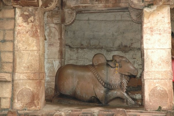 Each Shiva temple in the complex had a Nandi and each one in a different style