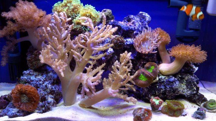 28 best ecoxotic led stunner strips images on pinterest for Jims exotic fish