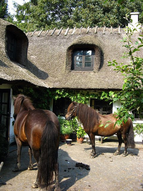Horses in thatched roof cottage courtyard
