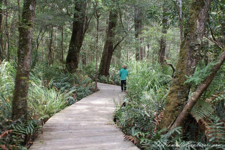 Tasmania, Day 6. Tarkine Forest Adventure near Smithton