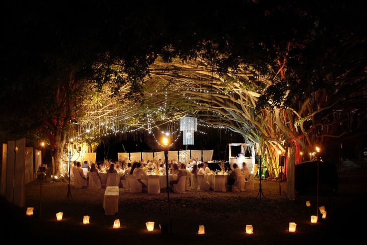 wedding reception under giant fig trees in port douglas, aus