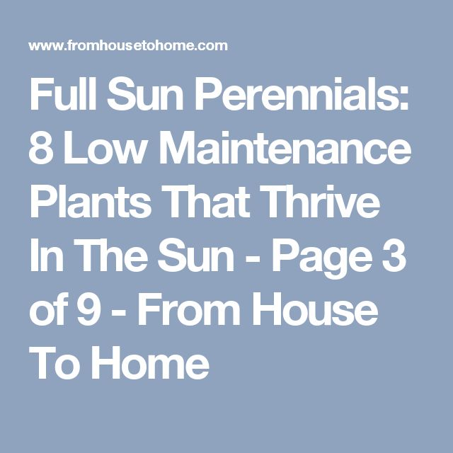Full Sun Perennials: 8 Low Maintenance Plants That Thrive In The Sun - Page 3 of 9 - From House To Home