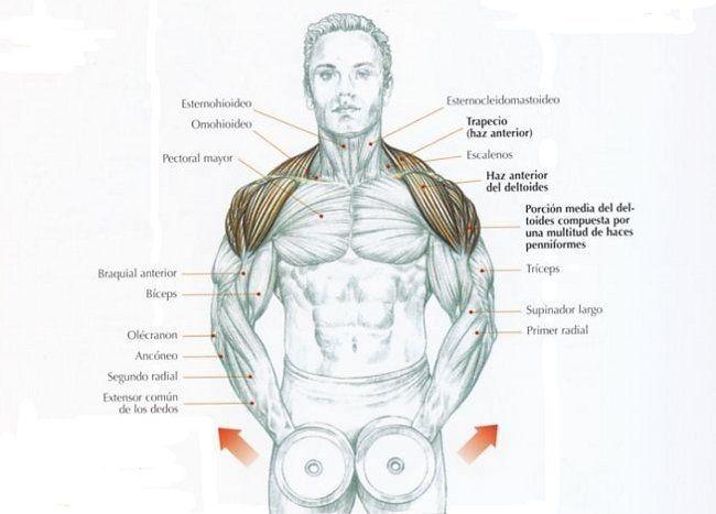 Shoulder exercices
