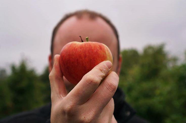 Wir waren wieder Äpfel pflücken 🍎🍏 - Die Wochenzusammenfassung 40 / 2016 ist jetzt online auf wihel.de 🍂🌾🍁 #applepicking #hurrahurraderherbstistda #wihelontour #altesland #anappleadaykeepsthedoctoraway