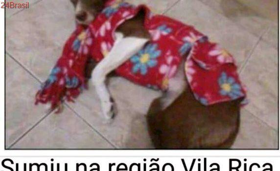 Procura-se cadela cores branco e chocolate desaparecida na Vila Rica, em SP