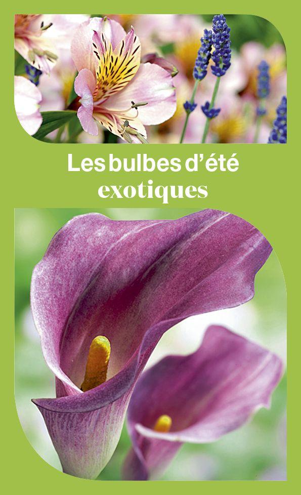 Les 91 meilleures images du tableau bulbes sur pinterest for Planter bulbe amaryllis