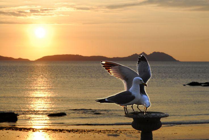 Ria de Vigo. Playa de Samil. Sed en el ocaso