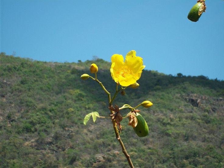 Naturaleza Valledupar, Colombia By Provincia Hostal Valledupar