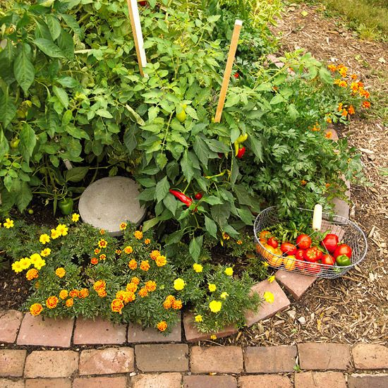 What a pretty picture - I need more marigolds to go with my tomato plants!