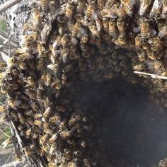 Bee Removal Los Angeles #beeremoval #beehive