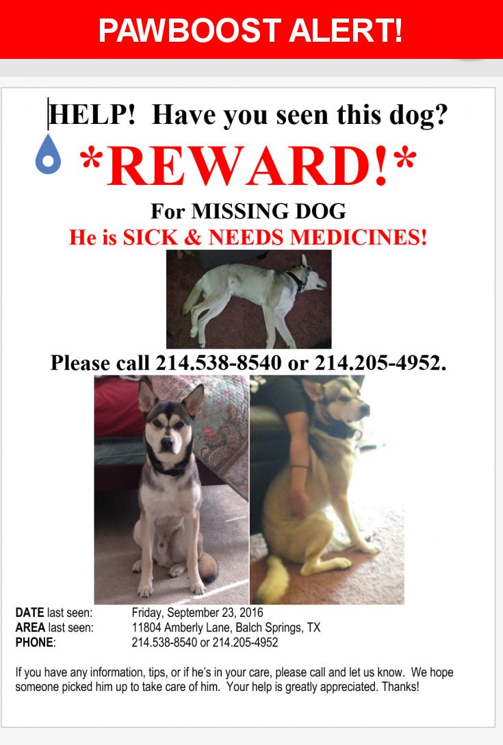 Please spread the word! Lanzo was last seen in Balch Springs, TX 75180.  Description: He is missing his collar. He's a very friendly dog but gets really depressed when his family is gone. He's on medication. Please notify us if you have seen him.  Nearest Address: 11804 Amberly Lane, Balch Springs, TX, United States