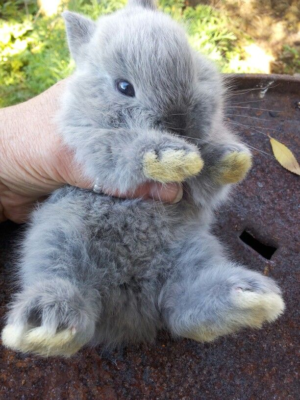 je suis un lapin coquin :)