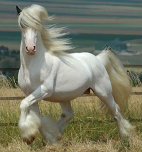 Real Pegasus