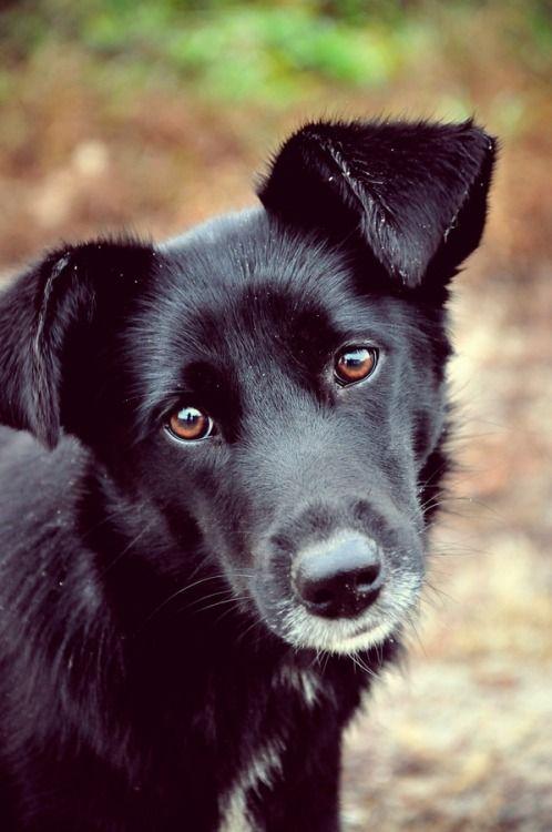 Cão, Adorável Dependência... Meu vira-lata!