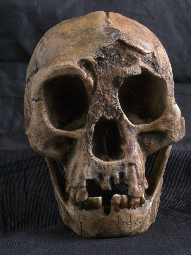 Scientists narrow time between hobbits and modern humans.