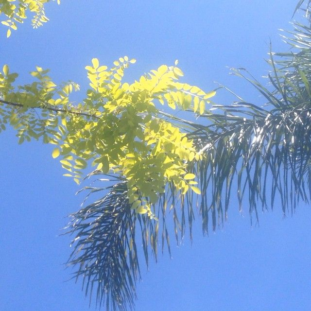 Spring sky #southernhemisphere #sky #blue #breeze #tree #green #yellow #movement